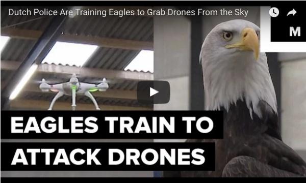 Drone eagle