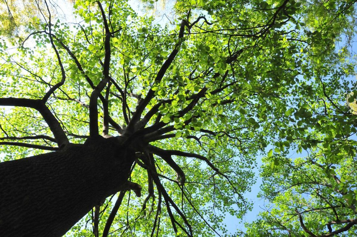 tree lookup 2.jpeg